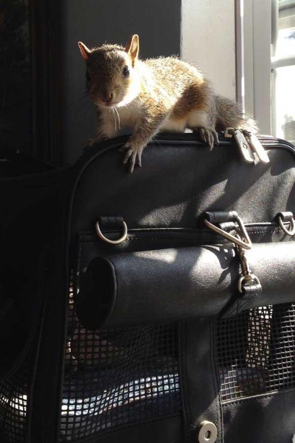 10-squirrel