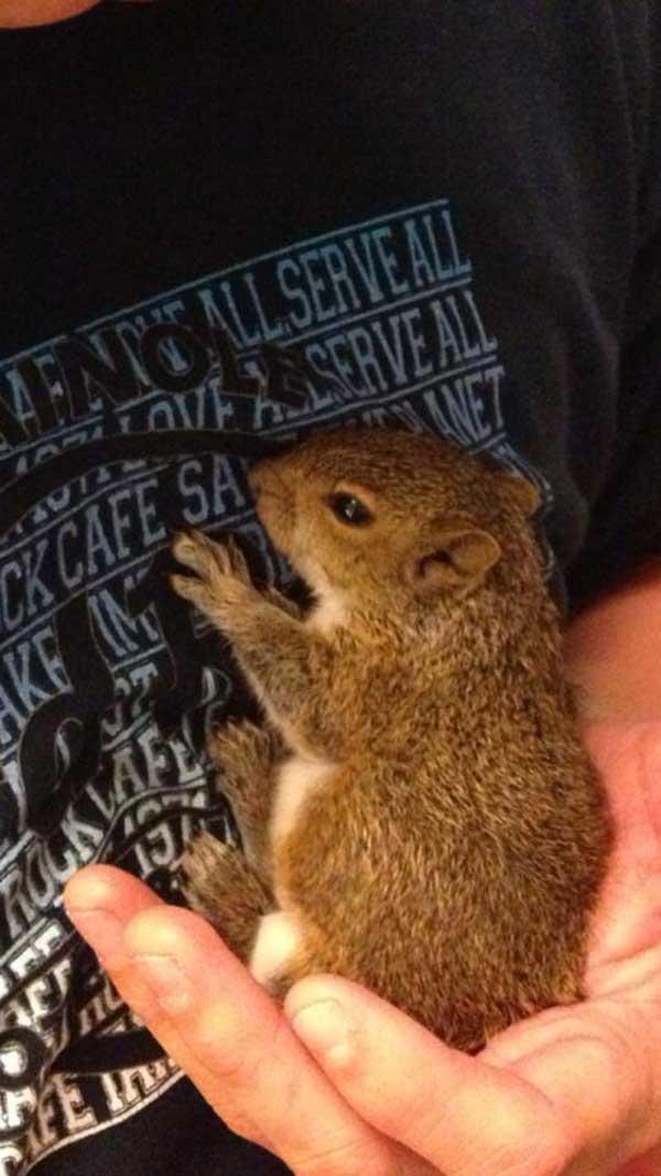 6-squirrel