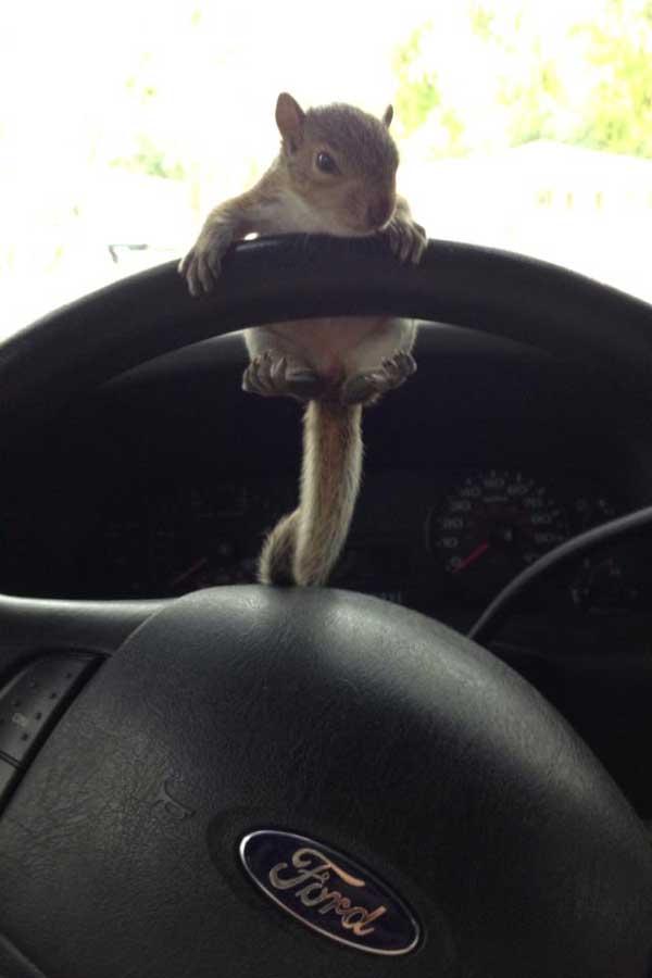 7-squirrel