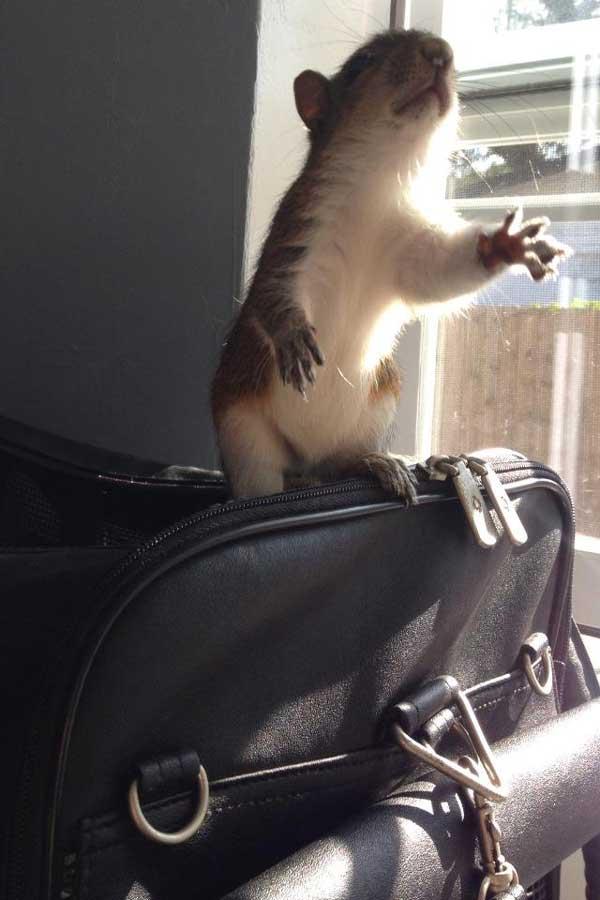 9-squirrel
