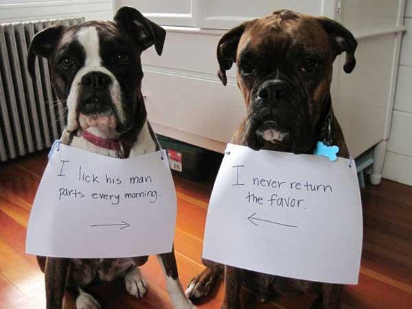 10-dog-shame