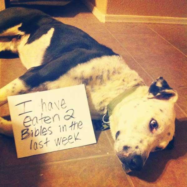 11-dog-shame