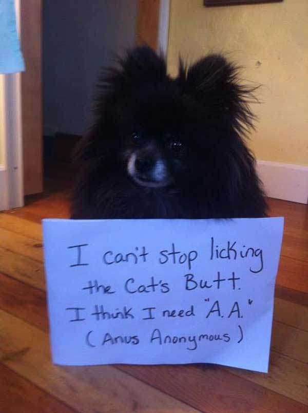 13-dog-shame