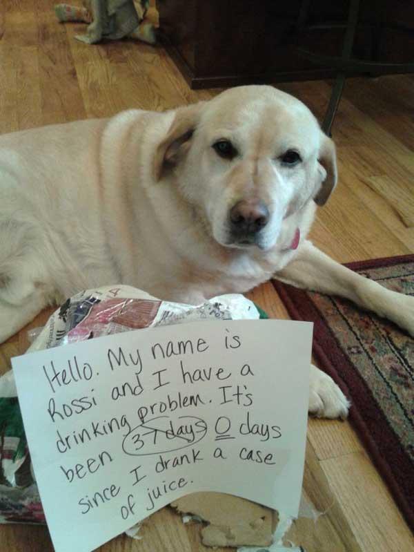 16-dog-shame