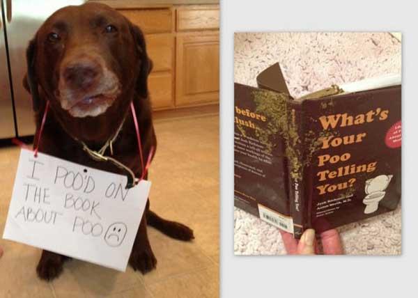 2-dog-shame