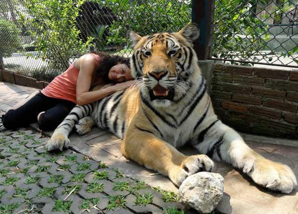 2-tiger