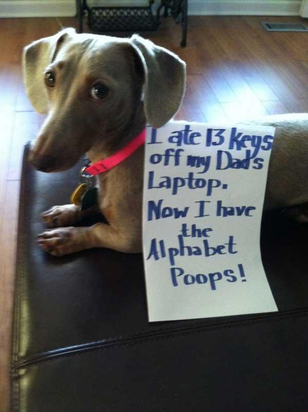 21-dog-shame