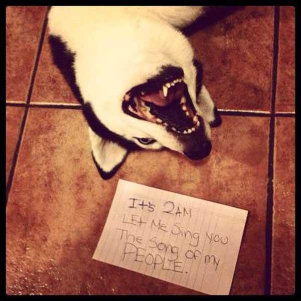 23-dog-shame