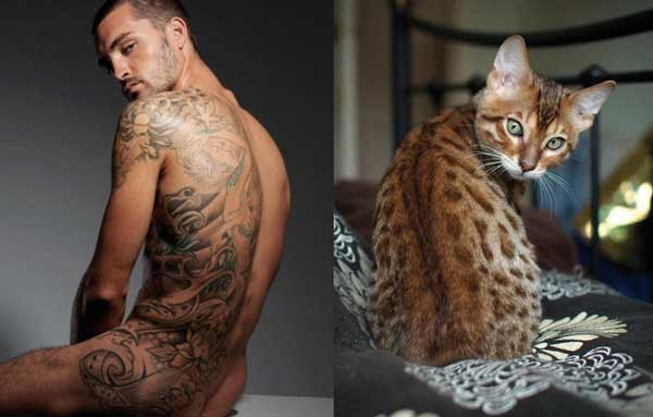 3-sexy-cats