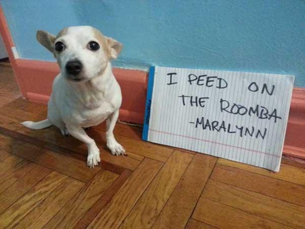 4-dog-shame