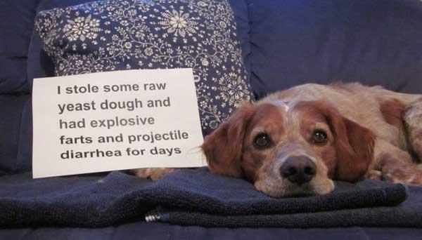 5-dog-shame