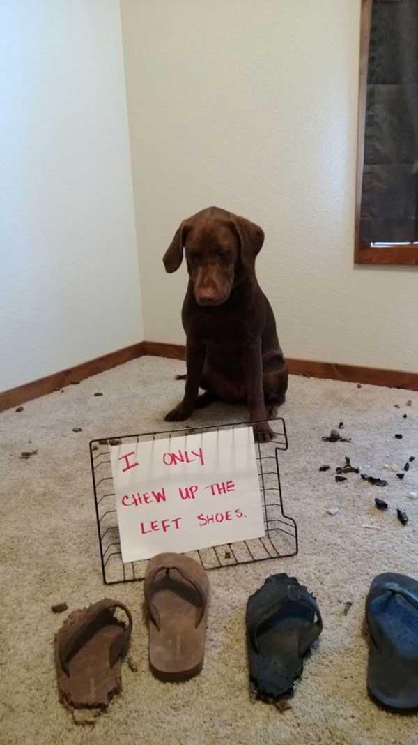 6-dog-shame