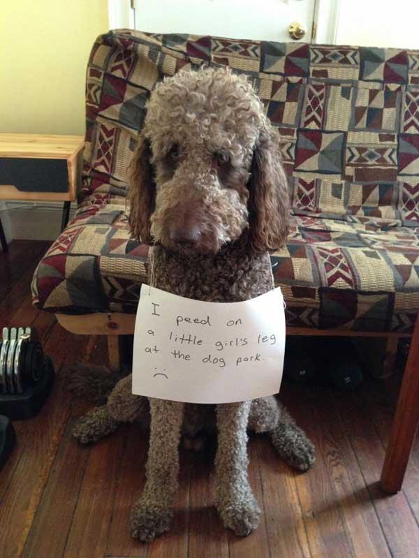 7-dog-shame