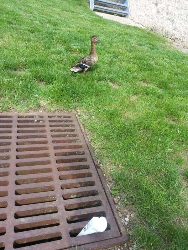 7-duckling