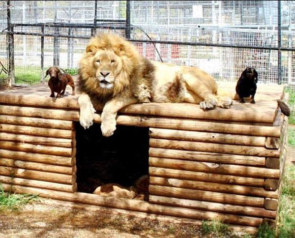 7-lion