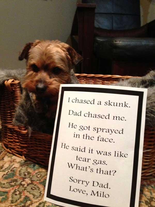8-dog-shame
