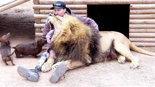 8-lion