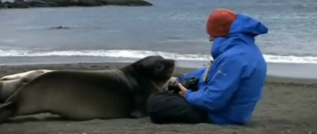 seal-feat