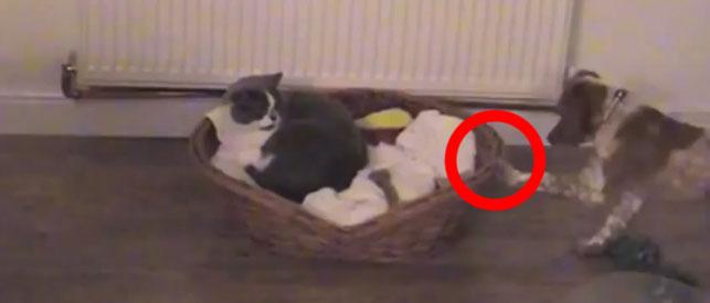 cat-feat-2