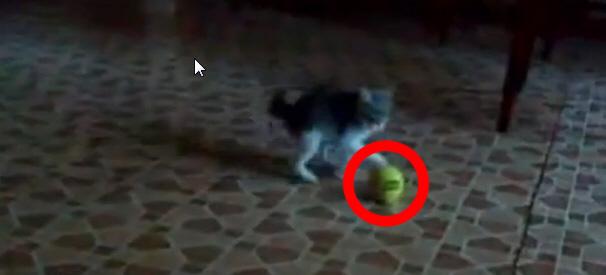 kitten-feat