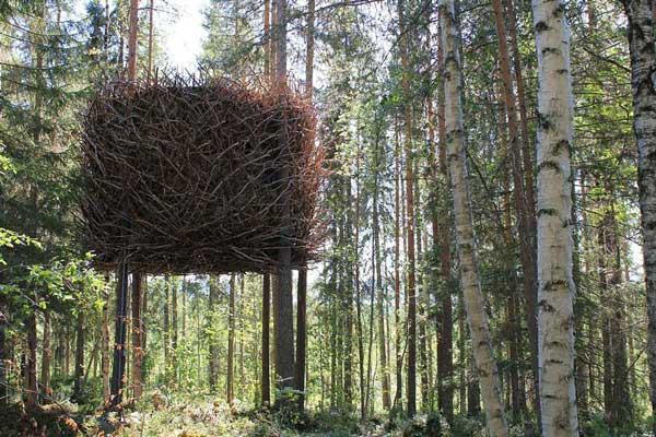 11-tree