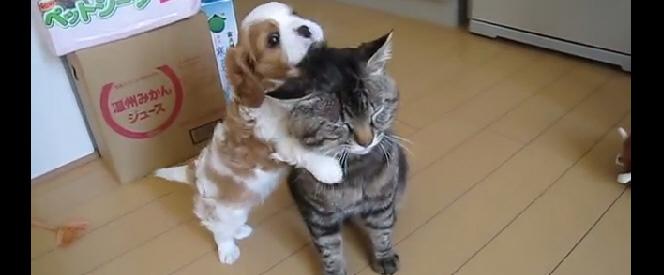 patient-cat-feat