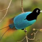 bird-feat