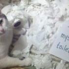 cat-shaming-feat