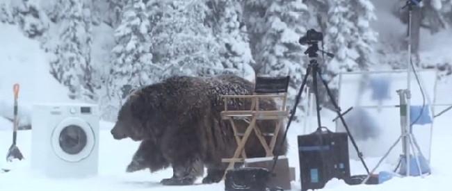 huge-bear-feat
