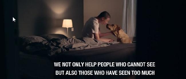 veteran-dog-feat
