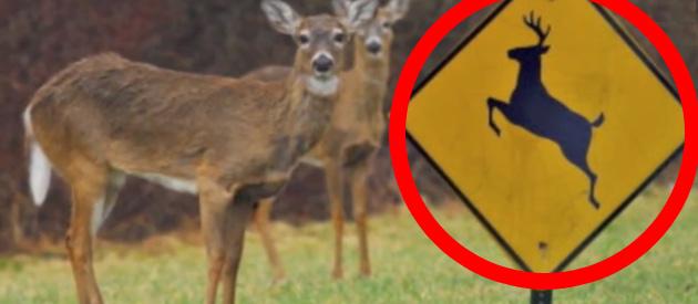 deer-cross-feat