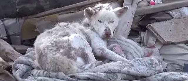 homeless-dog